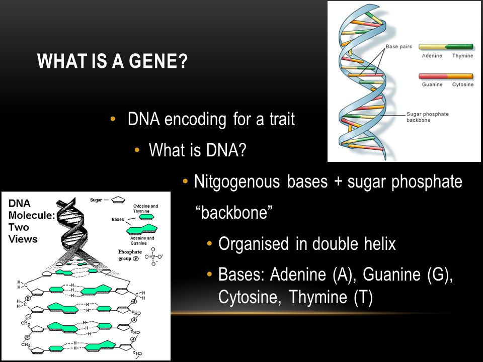 What is a gene DNA encoding for a trait What is DNA