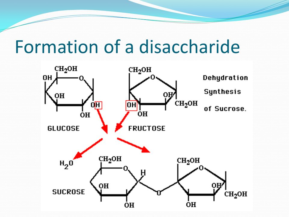 Formation of a disaccharide