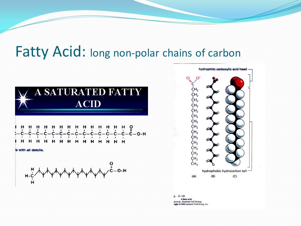 Fatty Acid: long non-polar chains of carbon