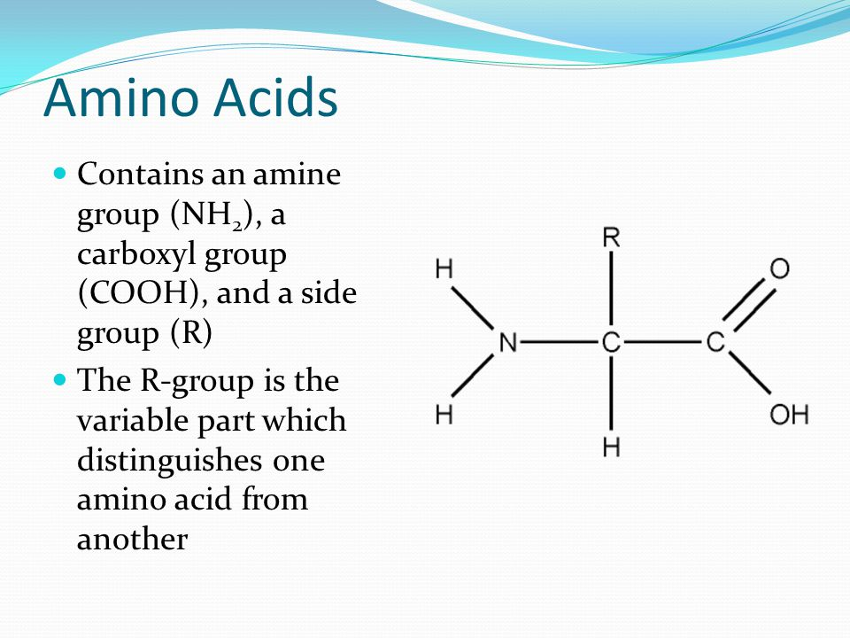 Amino Acids Contains an amine group (NH2), a carboxyl group (COOH), and a side group (R)