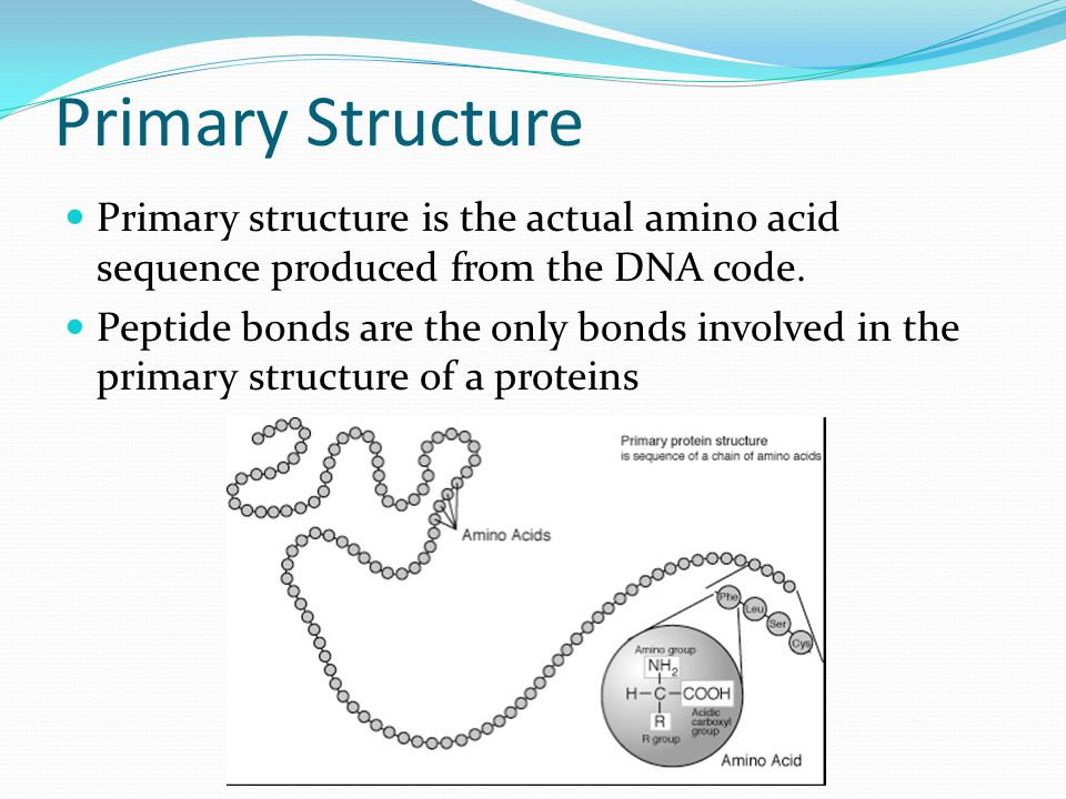 Primary Structure Primary structure is the actual amino acid sequence produced from the DNA code.