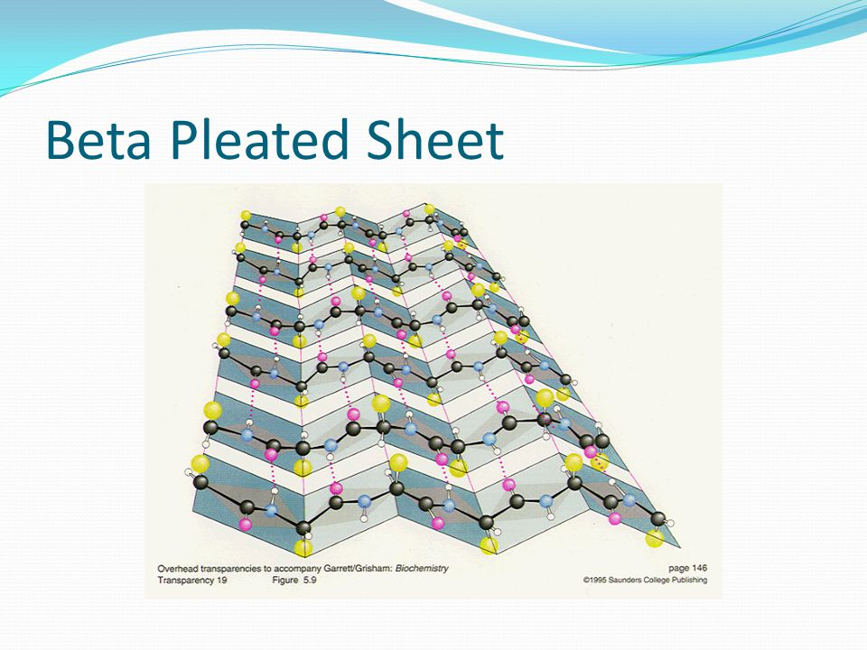 Beta Pleated Sheet