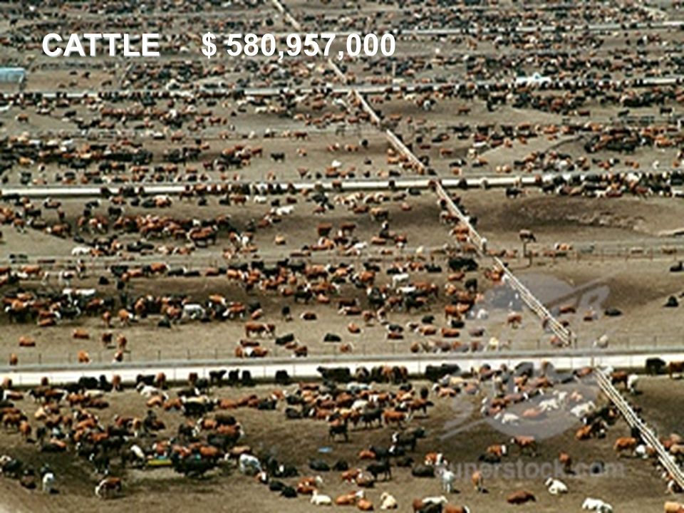 CATTLE $ 580,957,000