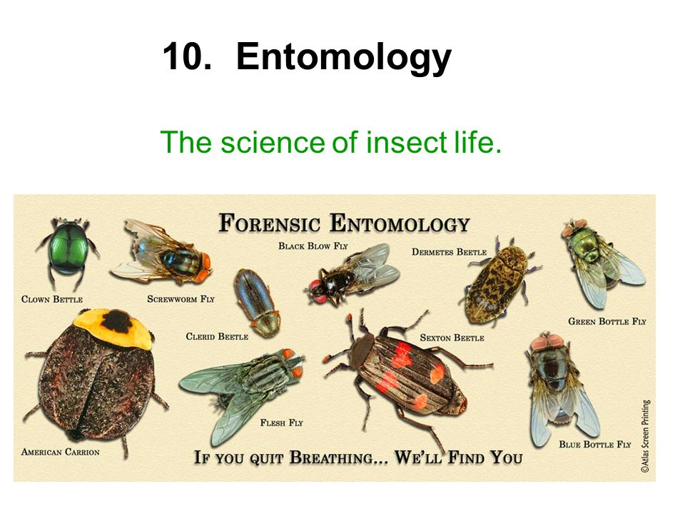 10. Entomology The science of insect life.