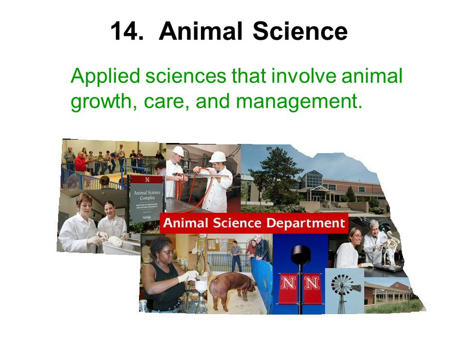 14. Animal Science Applied sciences that involve animal growth, care, and management.
