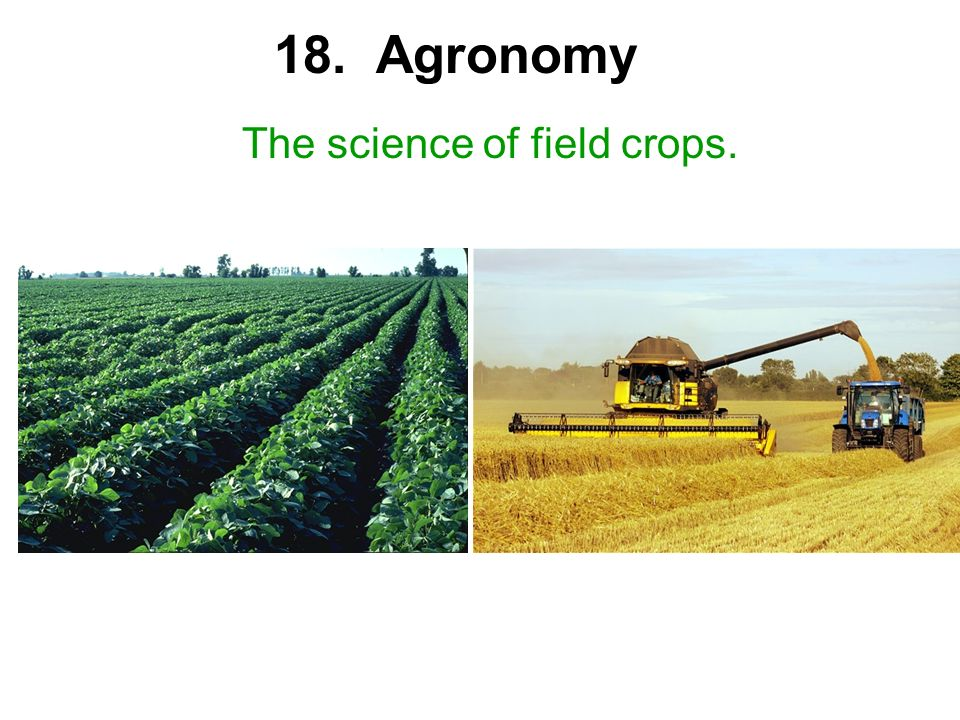 18. Agronomy The science of field crops.