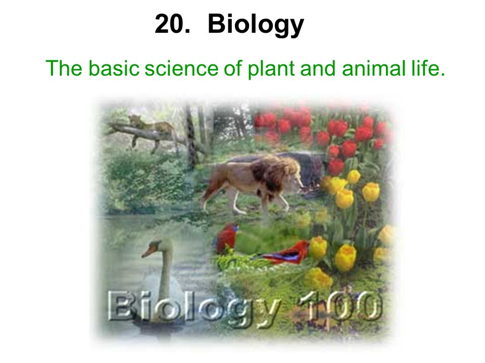 20. Biology The basic science of plant and animal life.