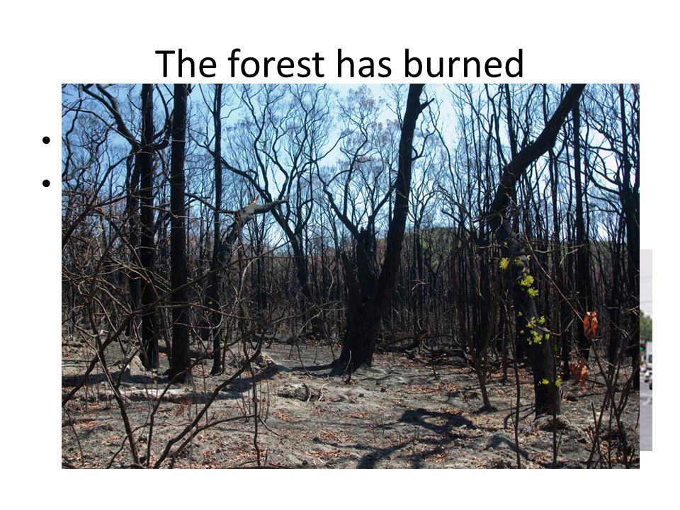 The forest has burned It is too late to call the fire brigade