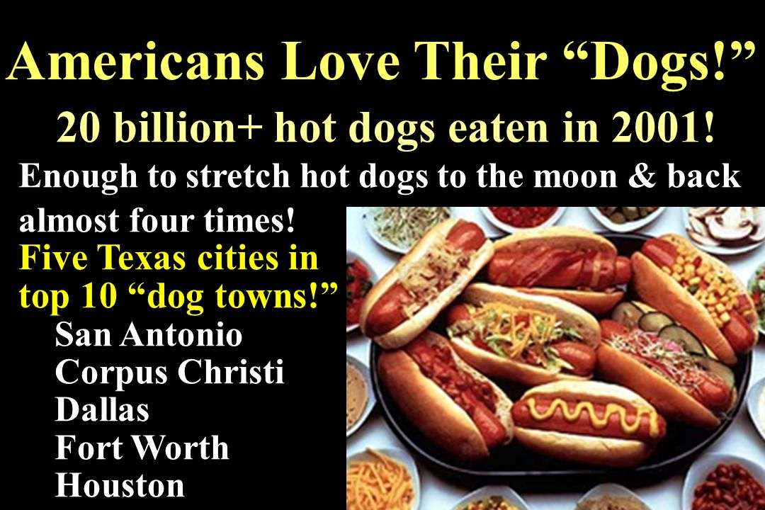 Americans Love Their Dogs!