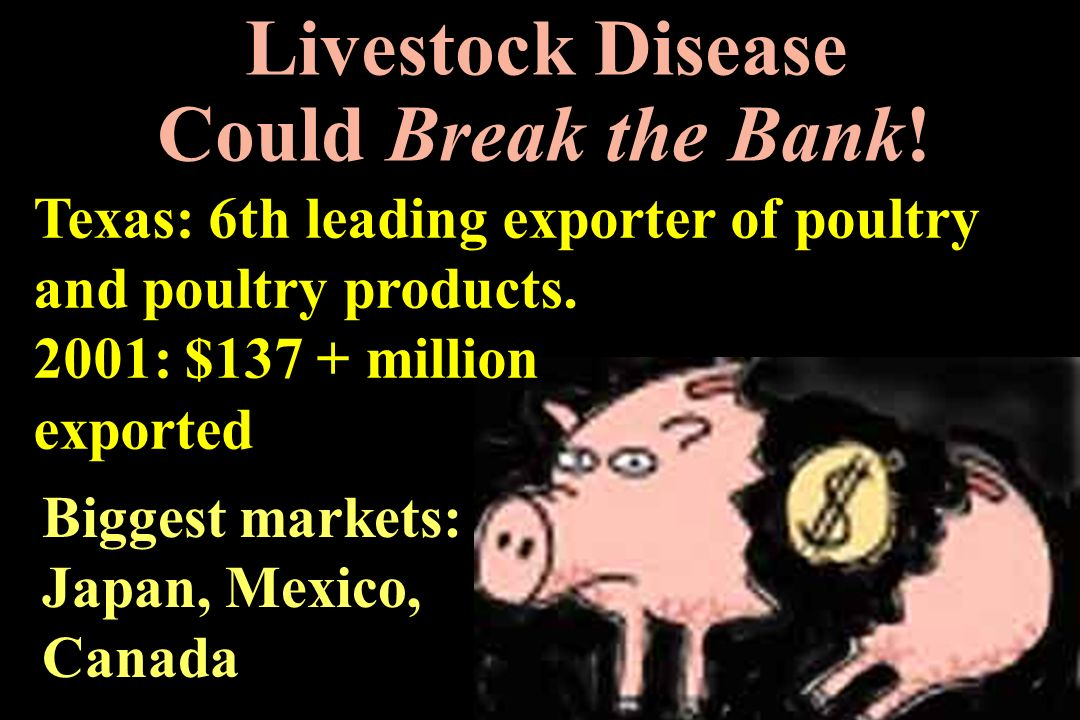 Livestock Disease Could Break the Bank!