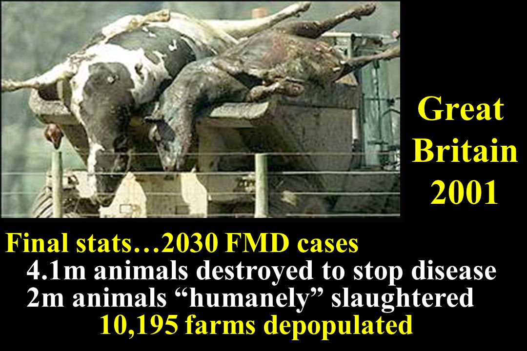 Great Britain 2001 Final stats…2030 FMD cases