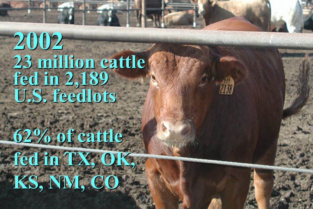 2002 23 million cattle fed in 2,189 U.S. feedlots 62% of cattle