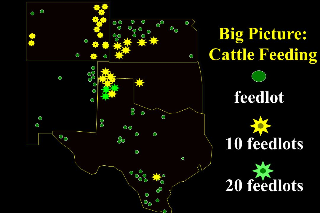 Big Picture: Cattle Feeding feedlot 10 feedlots 20 feedlots