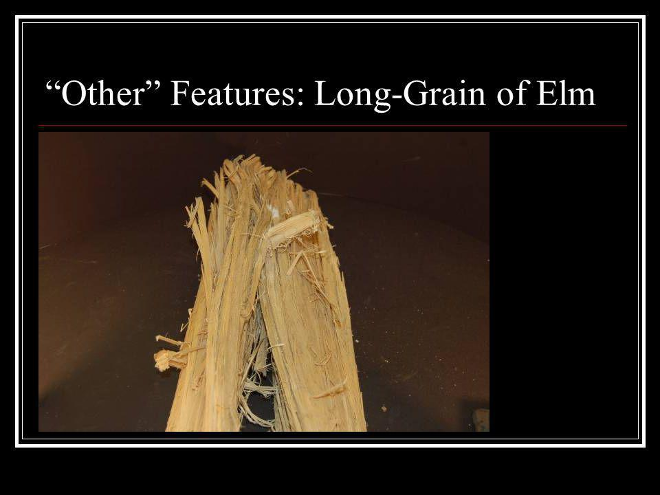 Other Features: Long-Grain of Elm