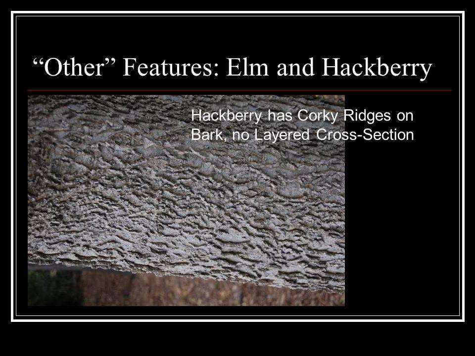 Other Features: Elm and Hackberry