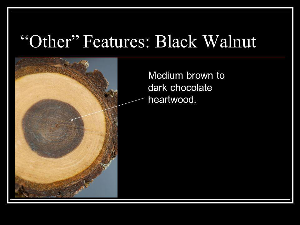 Other Features: Black Walnut