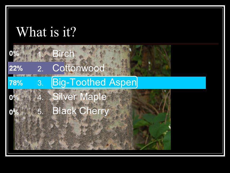 What is it Birch Cottonwood Big-Toothed Aspen Silver Maple