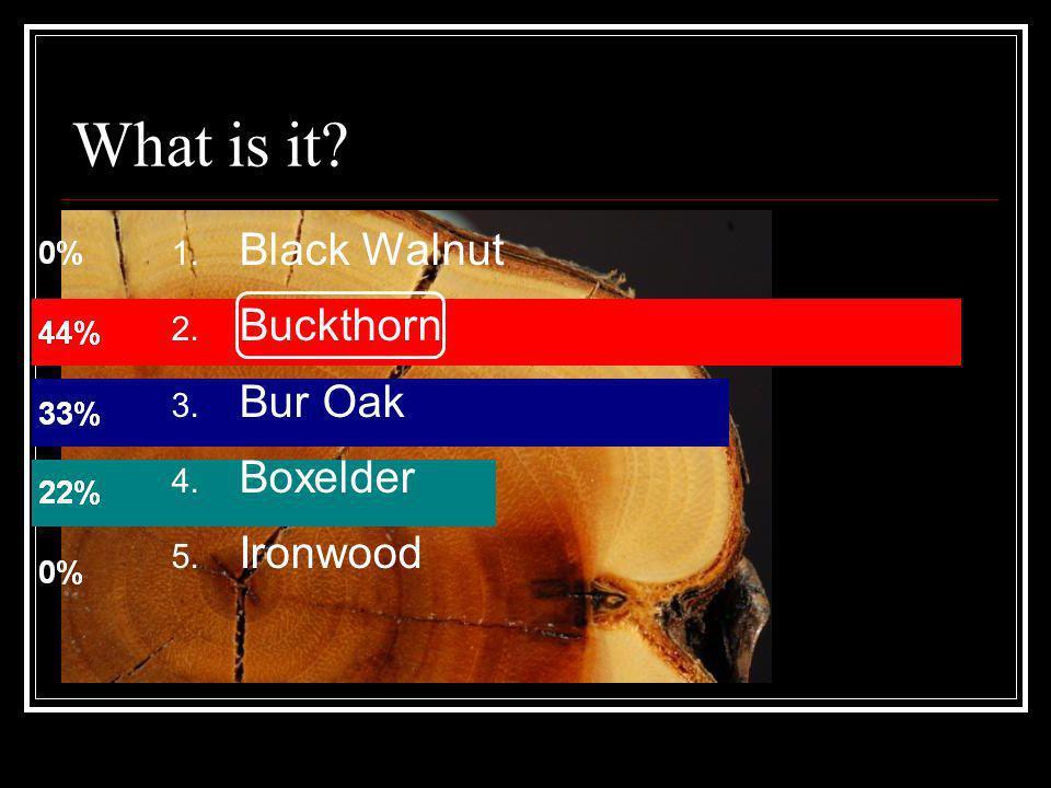 What is it Black Walnut Buckthorn Bur Oak Boxelder Ironwood