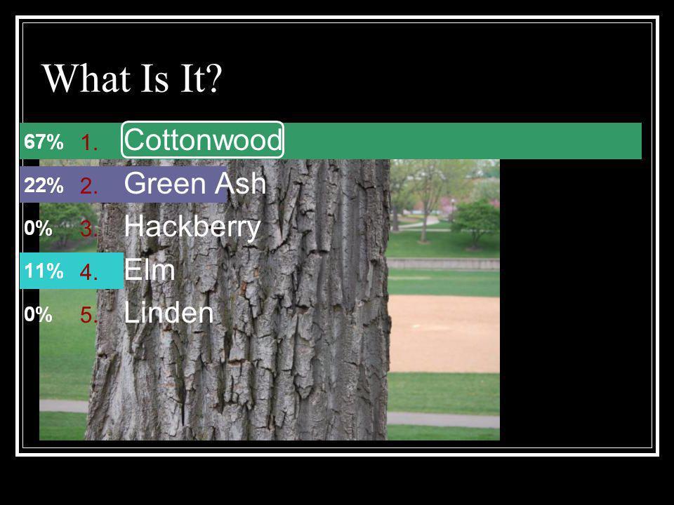 What Is It Cottonwood Green Ash Hackberry Elm Linden