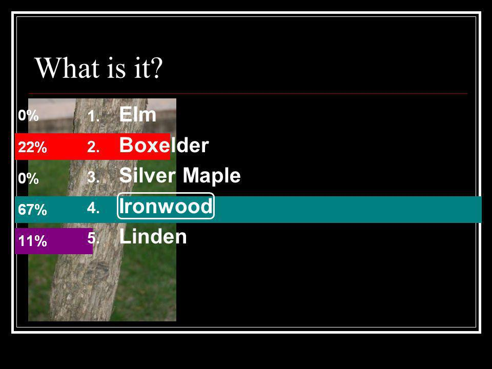 What is it Elm Boxelder Silver Maple Ironwood Linden