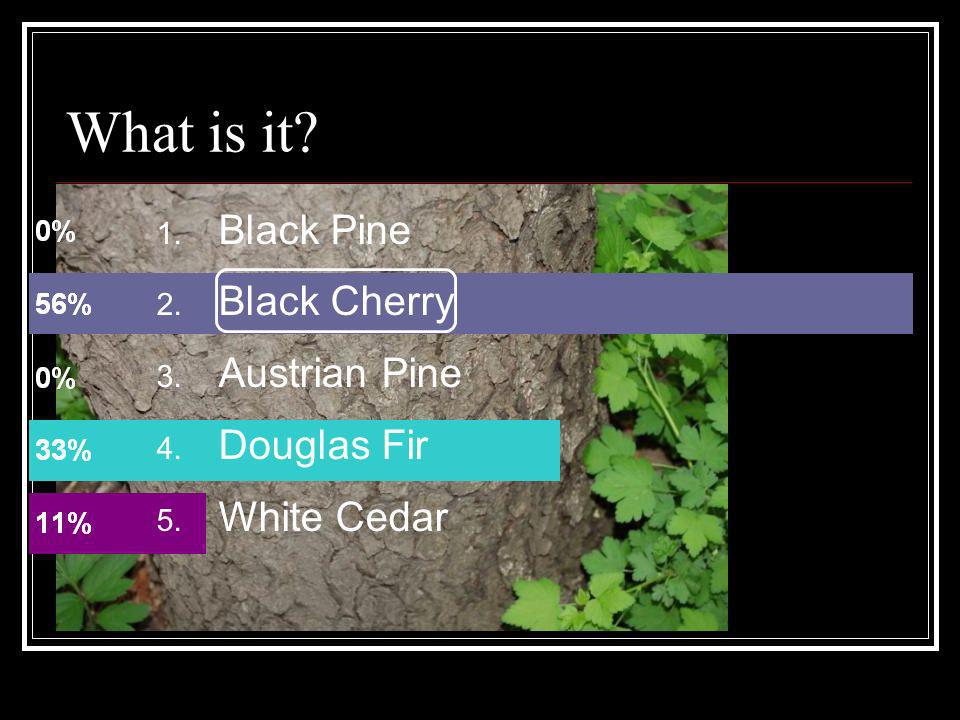 What is it Black Pine Black Cherry Austrian Pine Douglas Fir