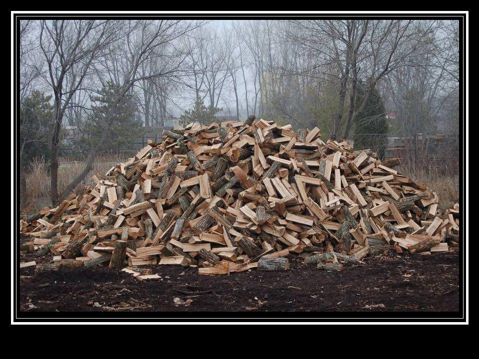 A pile of firewood like this is much more difficult to monitor unless it's being distributed from an approved distribution facility.