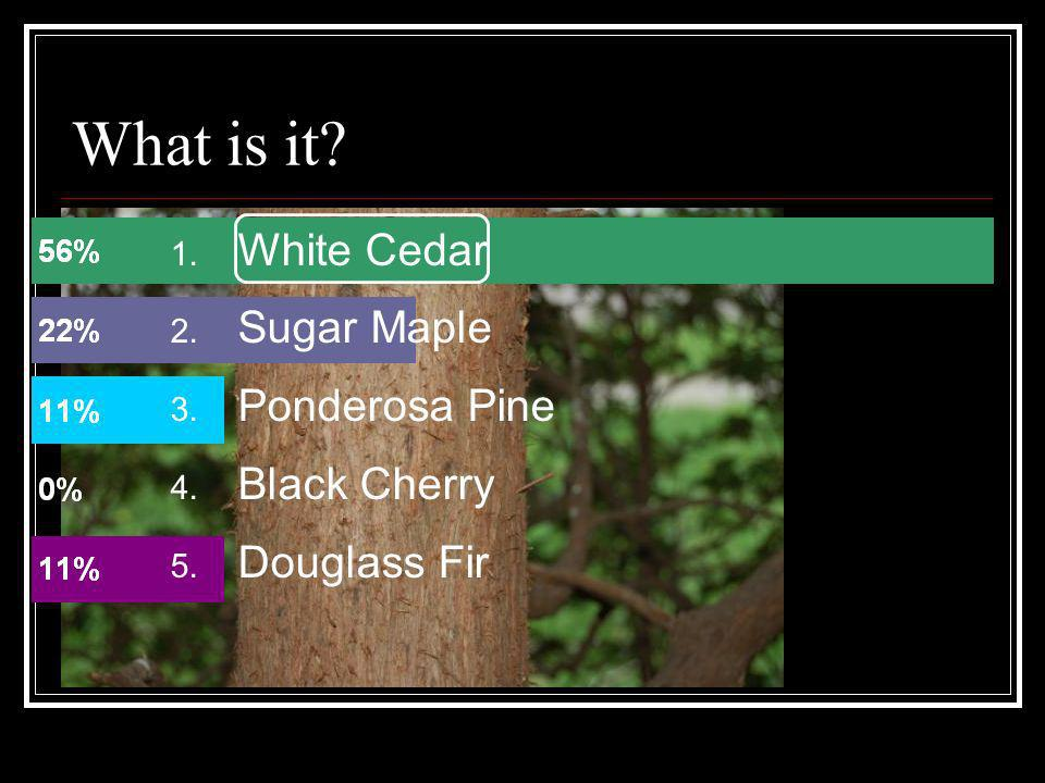 What is it White Cedar Sugar Maple Ponderosa Pine Black Cherry