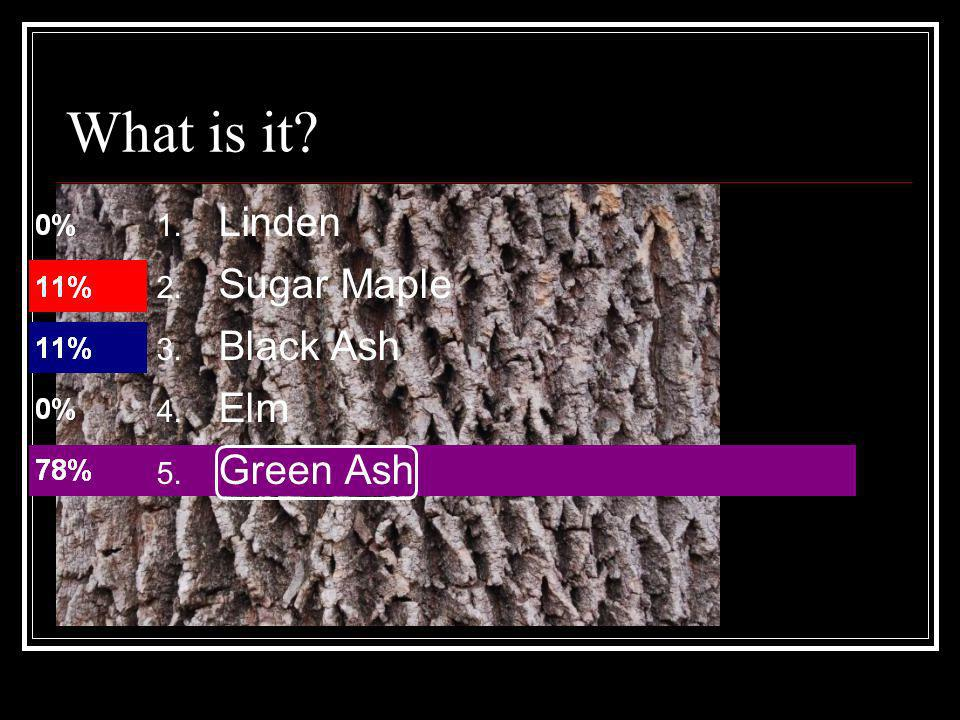 What is it Linden Sugar Maple Black Ash Elm Green Ash