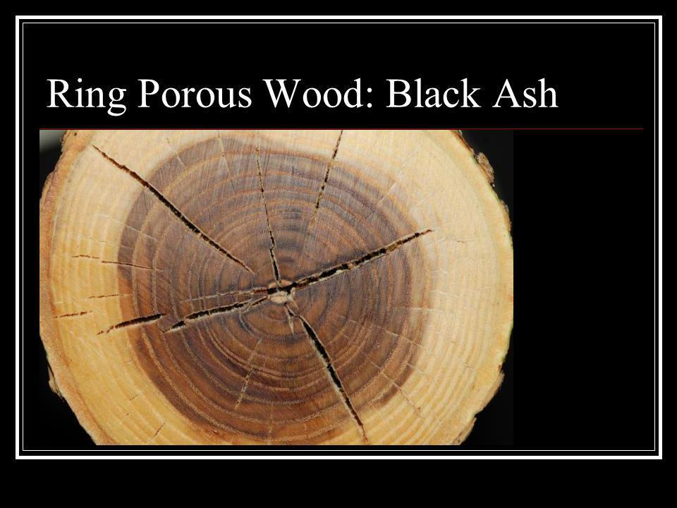 Ring Porous Wood: Black Ash
