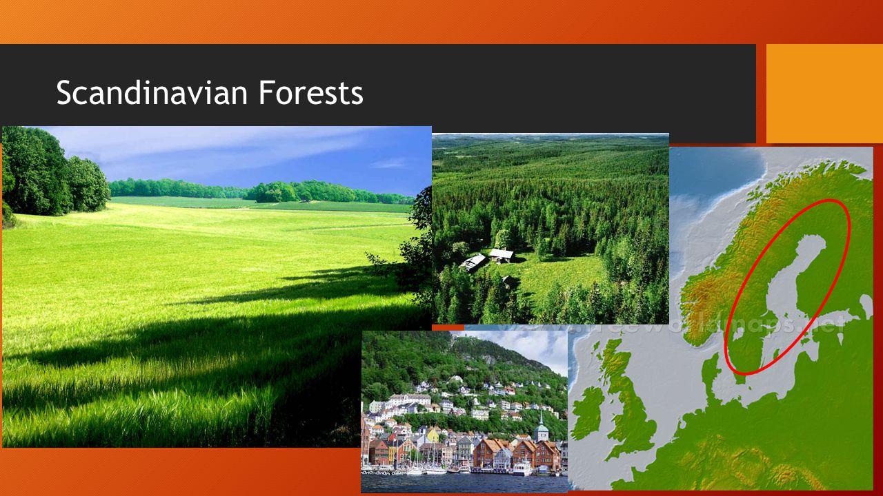 Scandinavian Forests