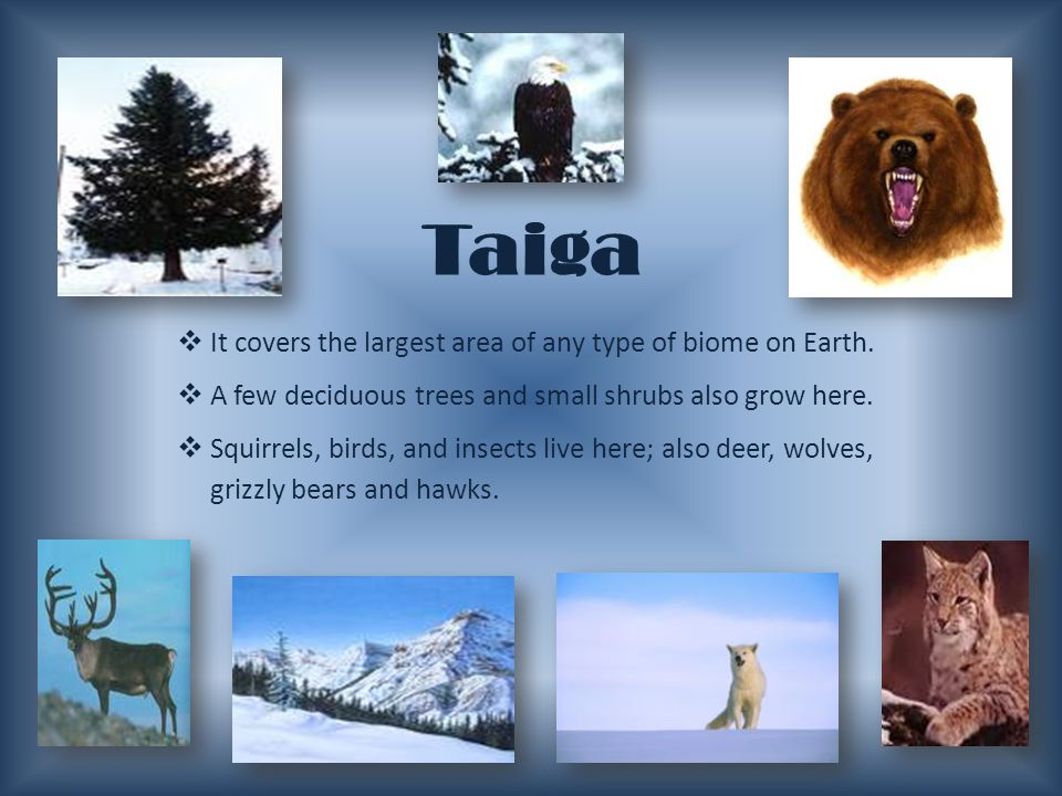 Taiga It covers the largest area of any type of biome on Earth.