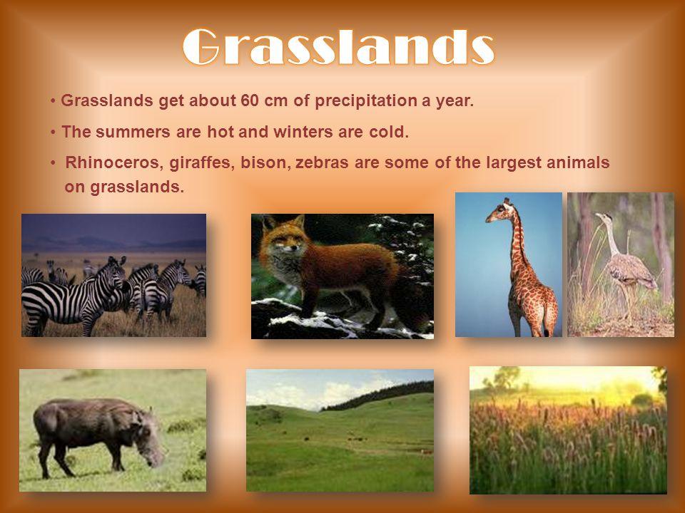 Grasslands Grasslands get about 60 cm of precipitation a year.