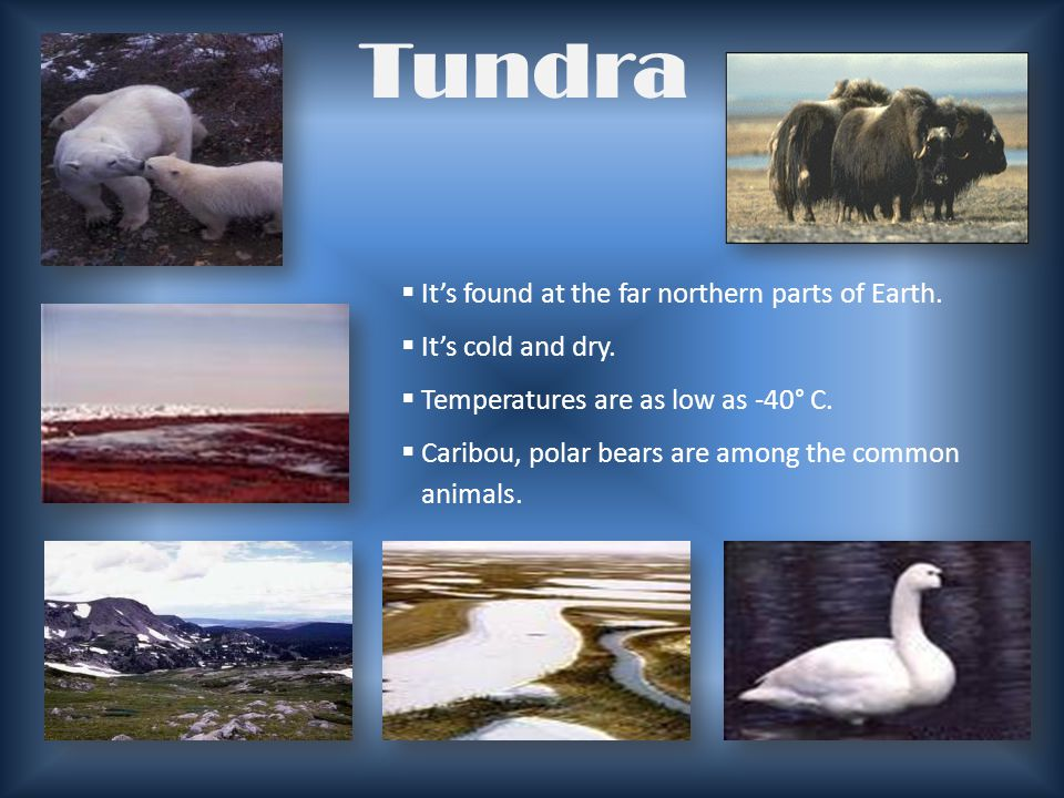 Tundra It's found at the far northern parts of Earth.