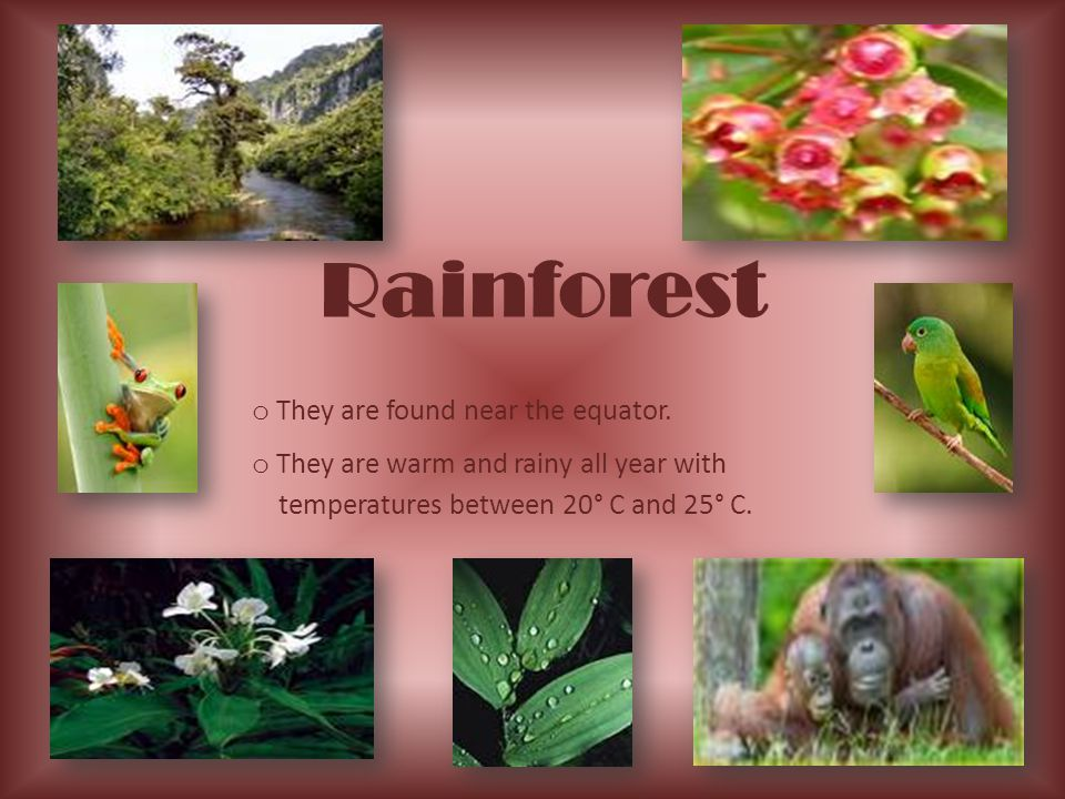 Rainforest They are found near the equator.