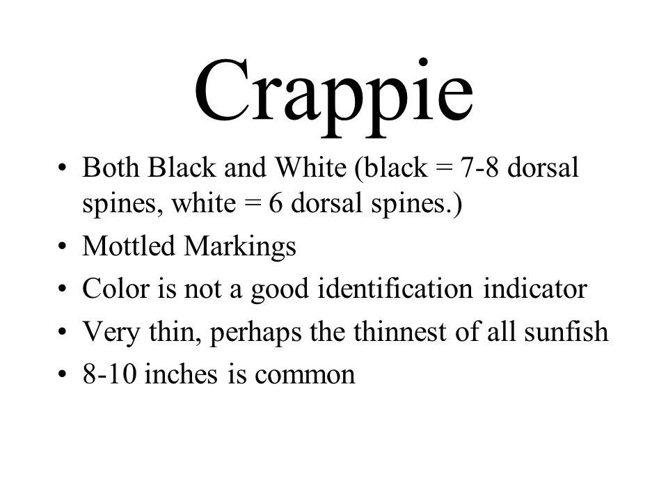 Crappie Both Black and White (black = 7-8 dorsal spines, white = 6 dorsal spines.) Mottled Markings.
