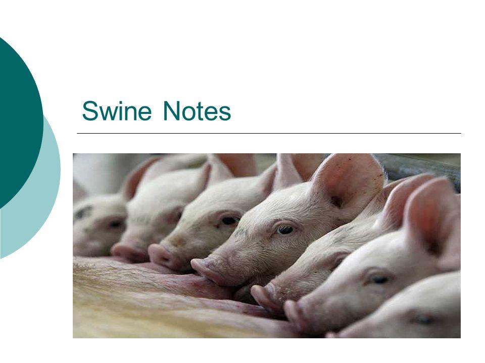 Swine Notes