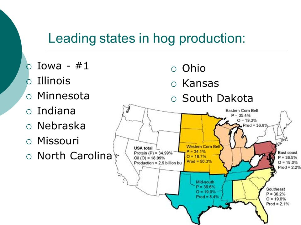 Leading states in hog production: