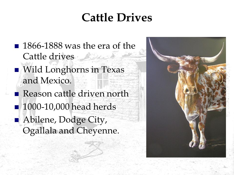 Cattle Drives was the era of the Cattle drives