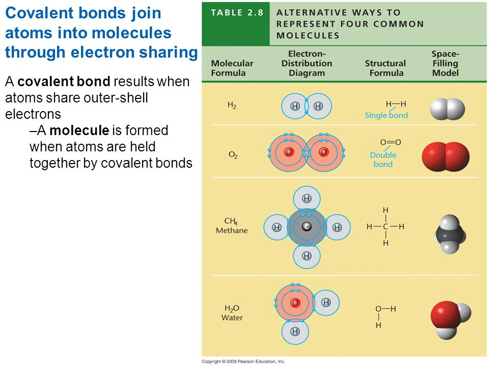 Covalent bonds join atoms into molecules through electron sharing