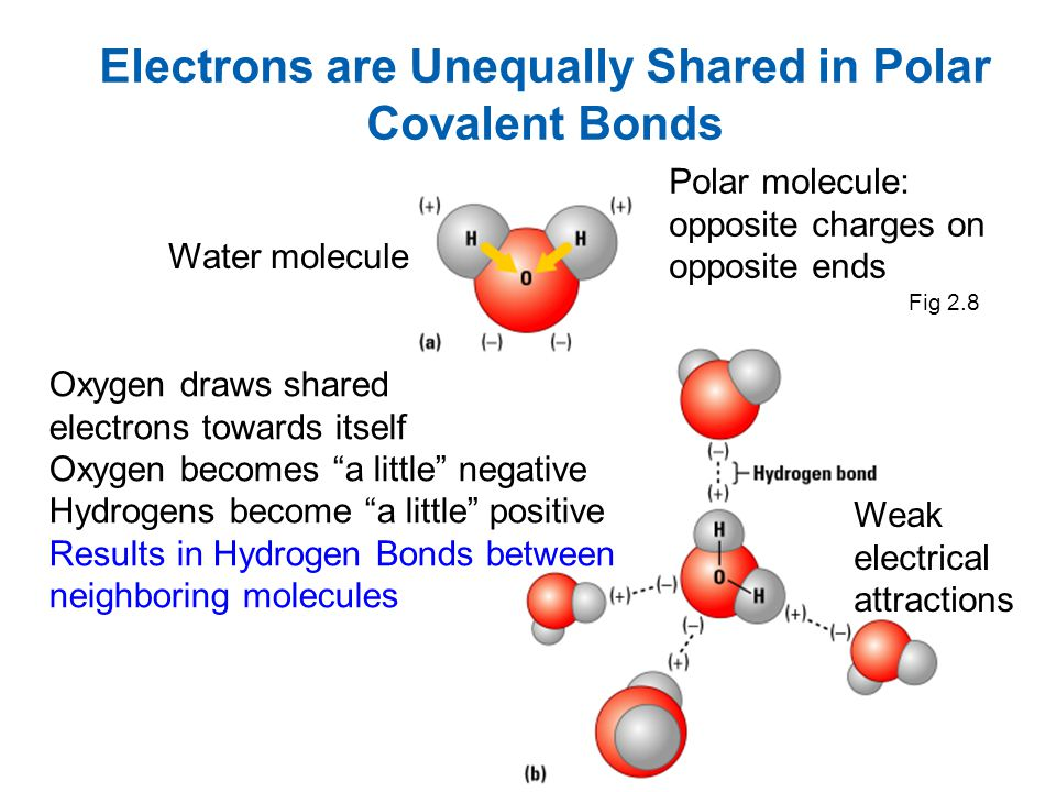 Electrons are Unequally Shared in Polar Covalent Bonds