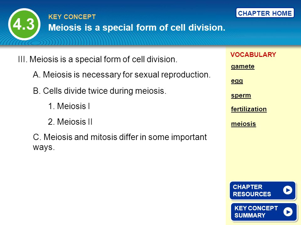 Meiosis is a special form of cell division.