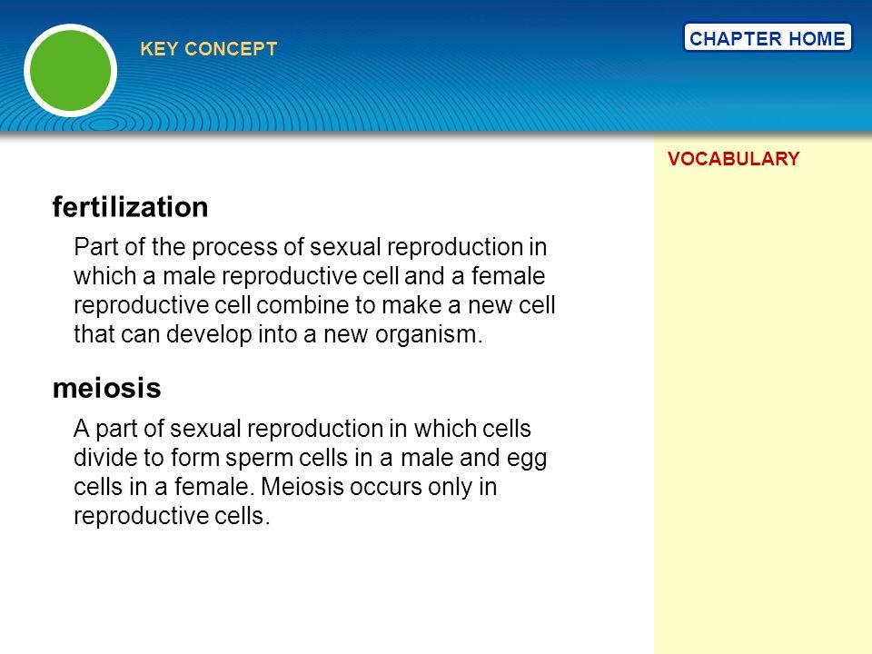 fertilization meiosis