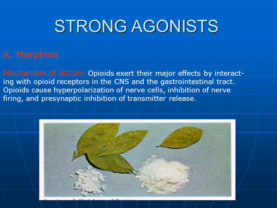 STRONG AGONISTS A. Morphine