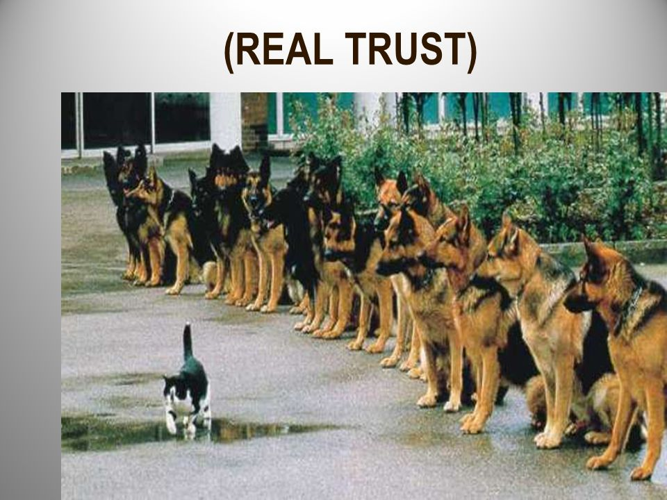 (REAL TRUST)