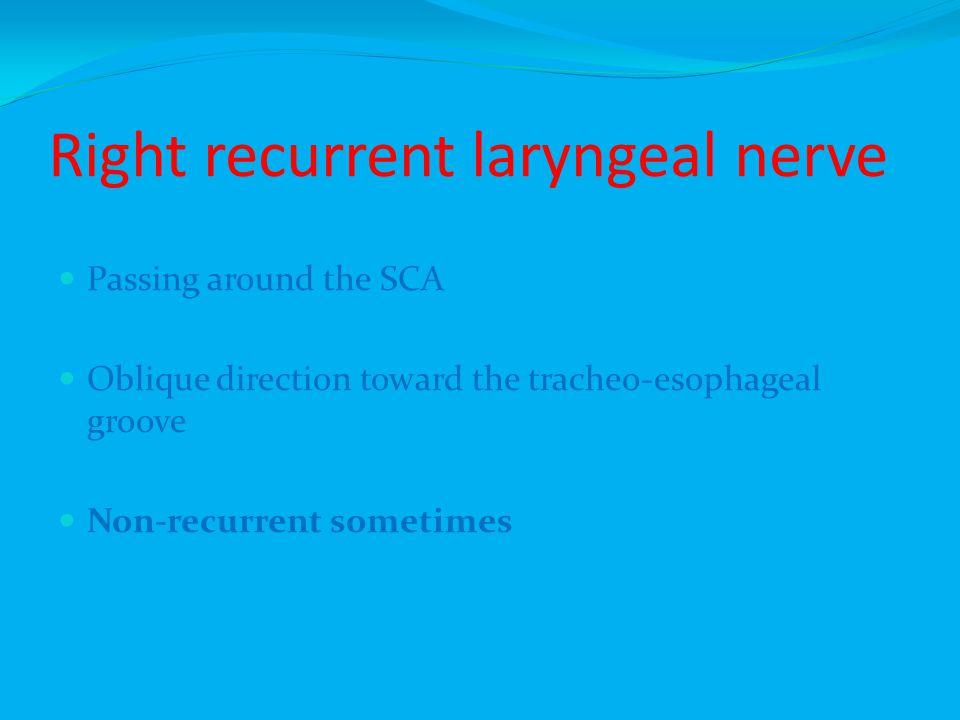 Right recurrent laryngeal nerve