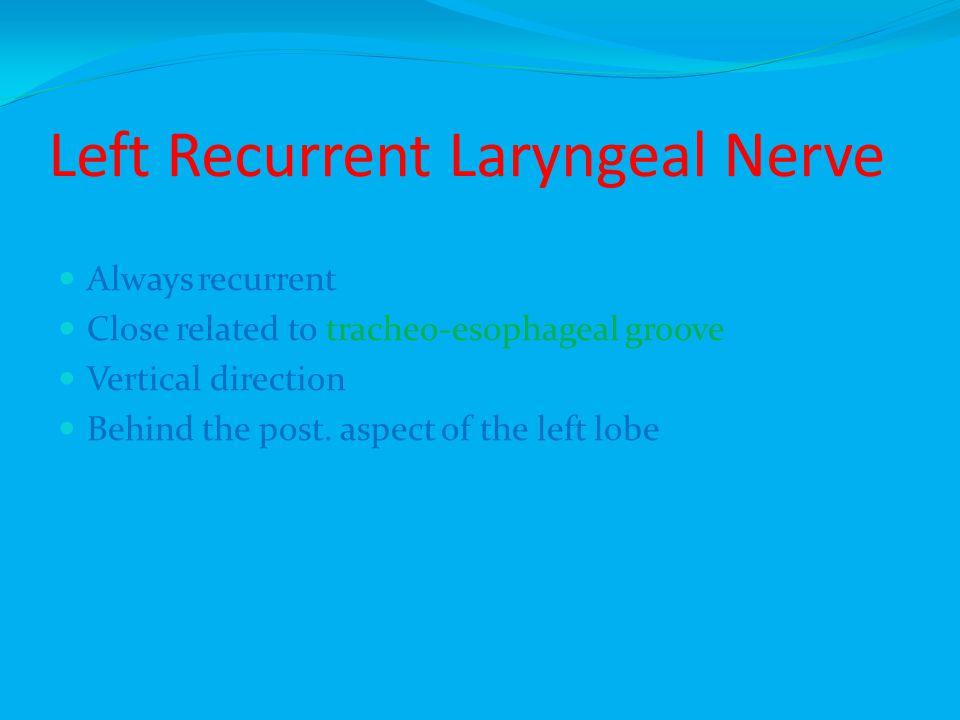 Left Recurrent Laryngeal Nerve