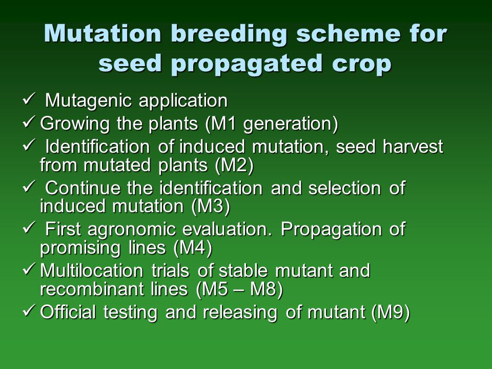 Mutation breeding scheme for seed propagated crop