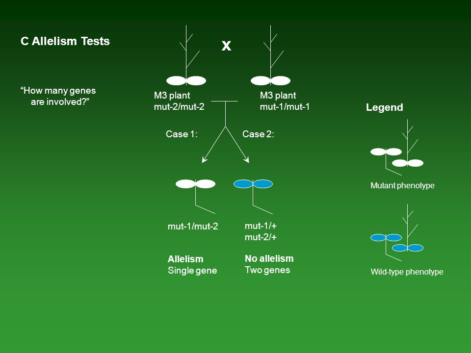 x C Allelism Tests Legend How many genes are involved M3 plant