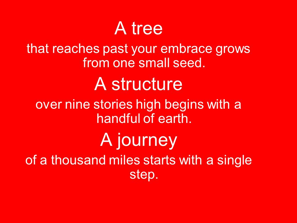 A tree A structure A journey
