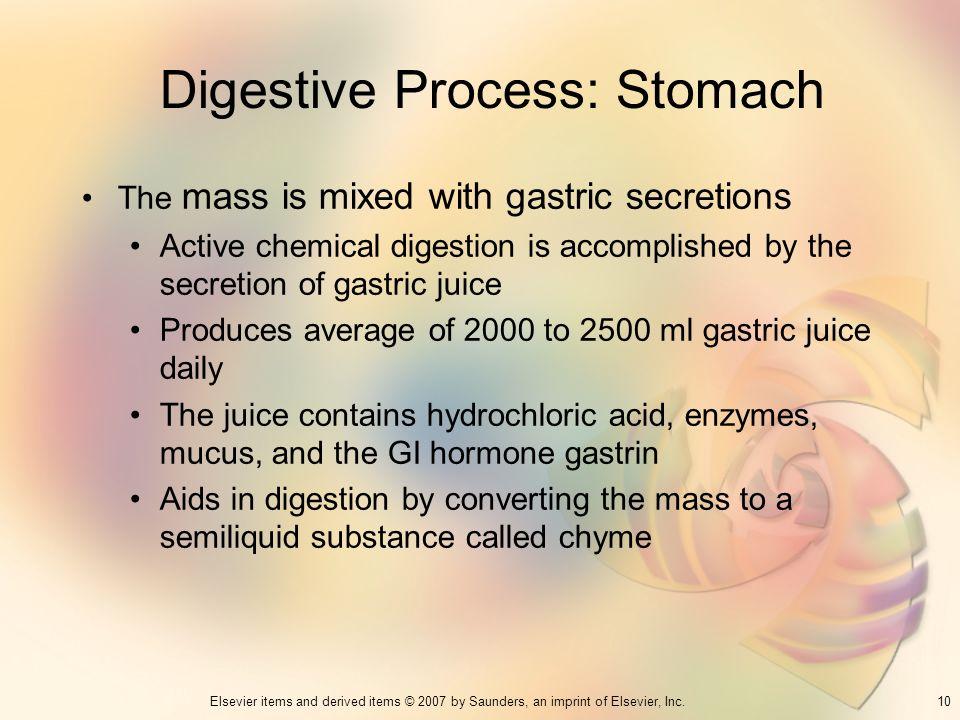 Digestive Process: Stomach